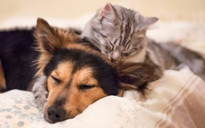 Dog and Cat Treatments