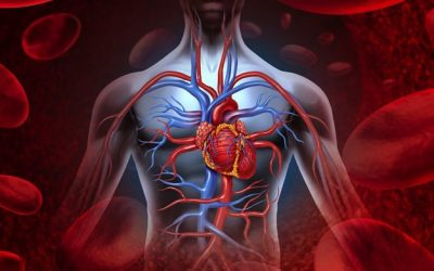 Heart & Circulatory Problems