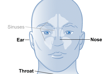 Ear, Nose, and Throat